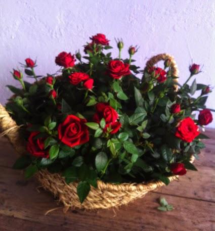 """239 Art floral per Sant Jordi - Celi Comas """"Verd és bo"""""""