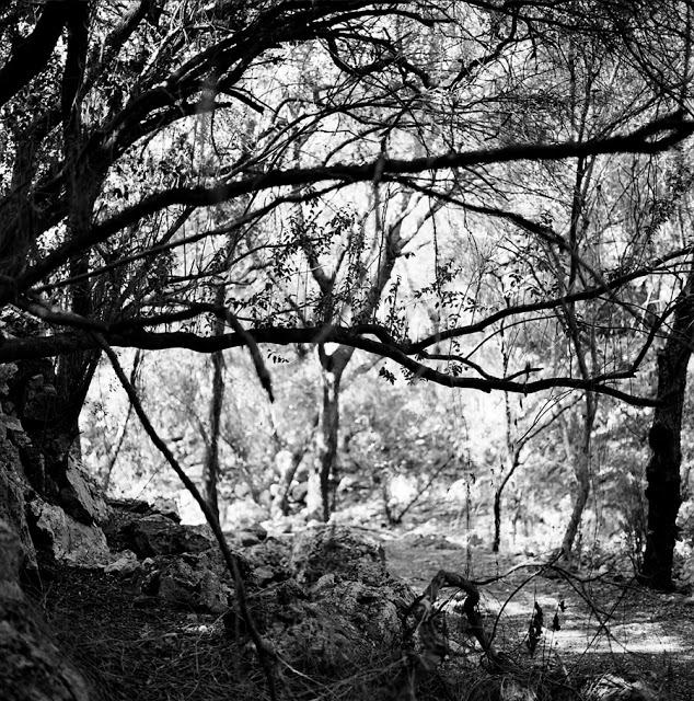 artxtu-sanz-boscmenorca Cicle de fotografia (II): Manel Sanz, la textura del temps