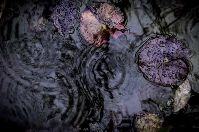 artxtu-carmenescudero-caprichosdepecera1-compressor Carmen Escudero - Poesia i emotivitat