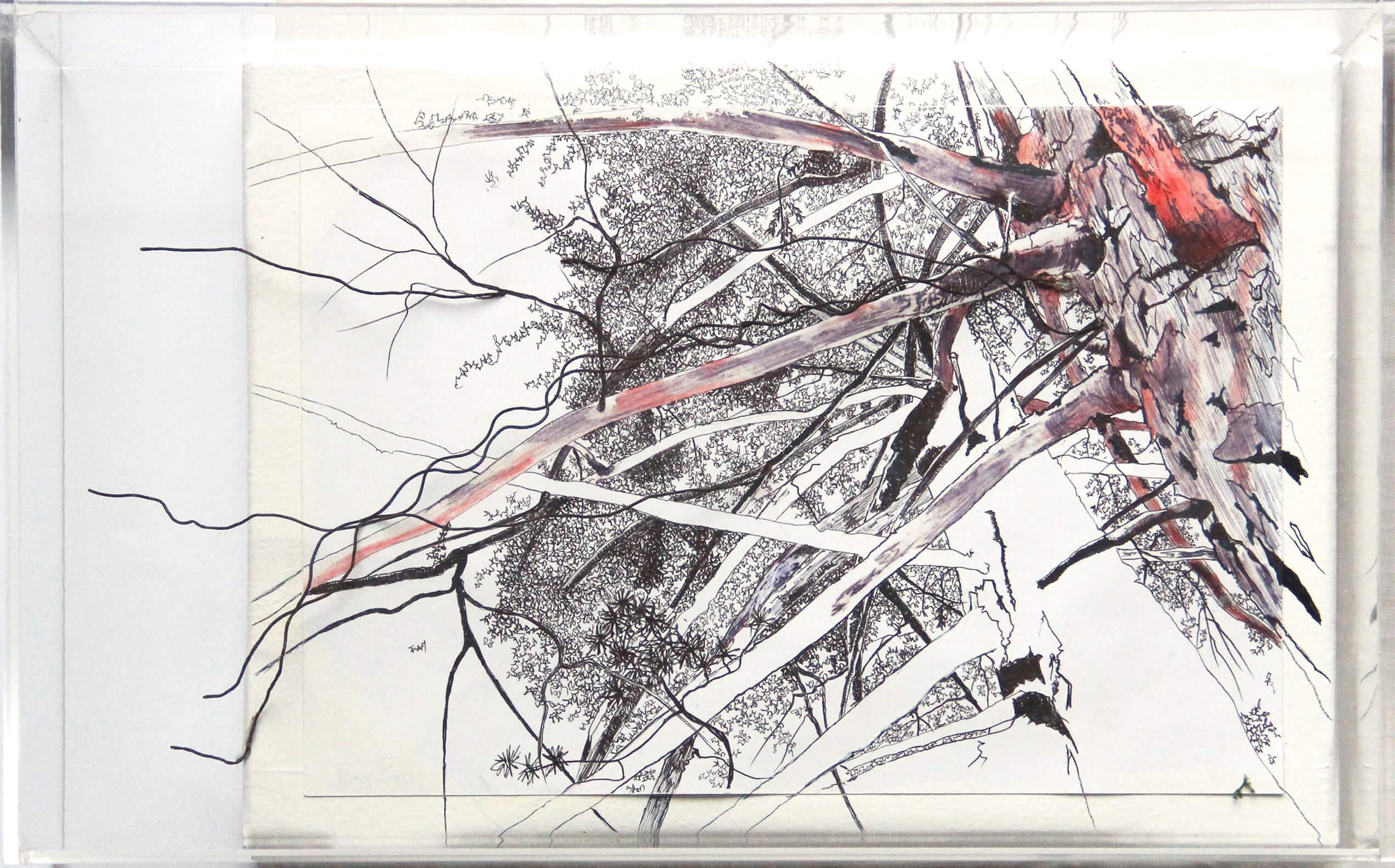 725euros-Alló-que-amaguen-els-arbres-IX-40x25cm-tècnica-mixta-d-paper-i-capsa-metacrilaIMG_0071 Tatiana Blanqué